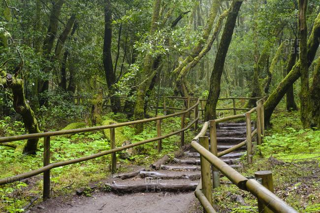 Spain- Province of Santa Cruz de Tenerife- Empty forest footpath in Garajonay National Park