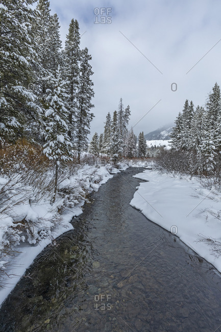 Stream and pine trees with snow in Sun Valley, Idaho