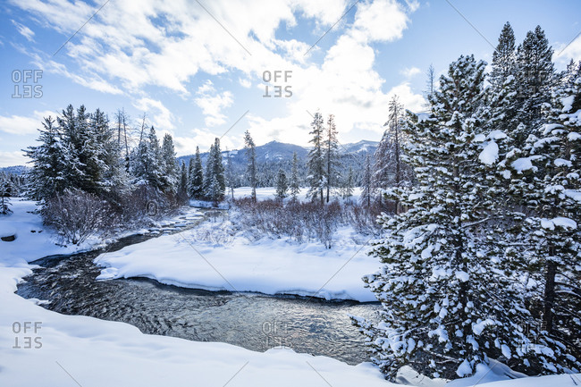 Pine trees and snow by river in Sun Valley, Idaho