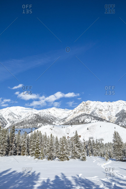 Pine trees and snowy mountain in Sun Valley, Idaho