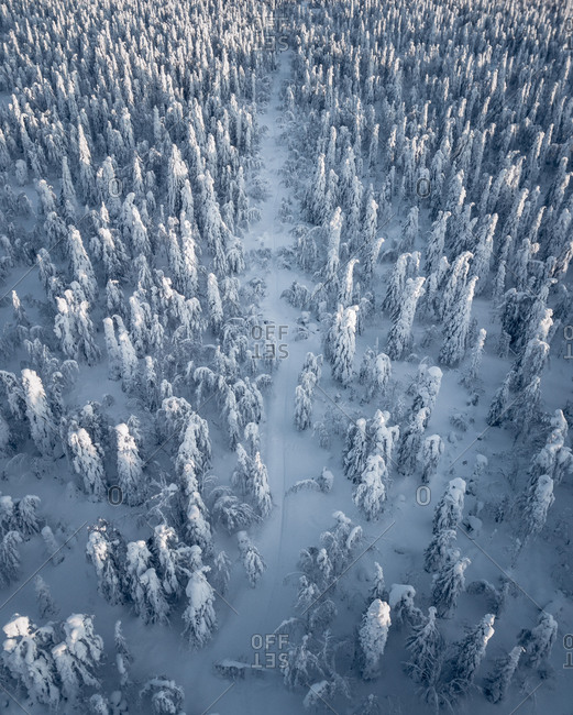 Aerial view of treetops in winter season with the path into the frozen forest, Perm krai, Usva, Russia.
