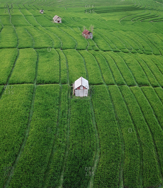 Aerial view of a small hut in green lucious rice fields in Canggu, Bali, Indonesia