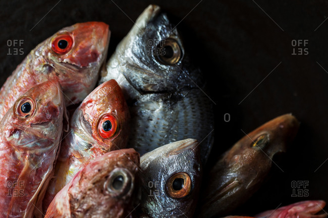 Close up of a variety of fish