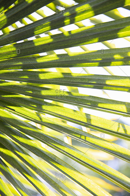 Sunlight and shadows on green palm leaves