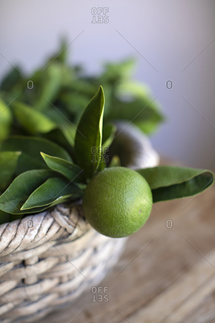 Close up of a lime with leaves in a basket