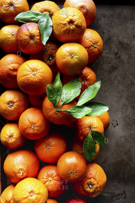 Overhead view of variety of whole citrus fruits