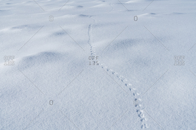 Isolated view of tracks in snow