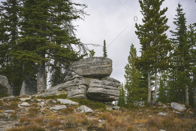 Boulders Among A Grove Of Evergreen Trees