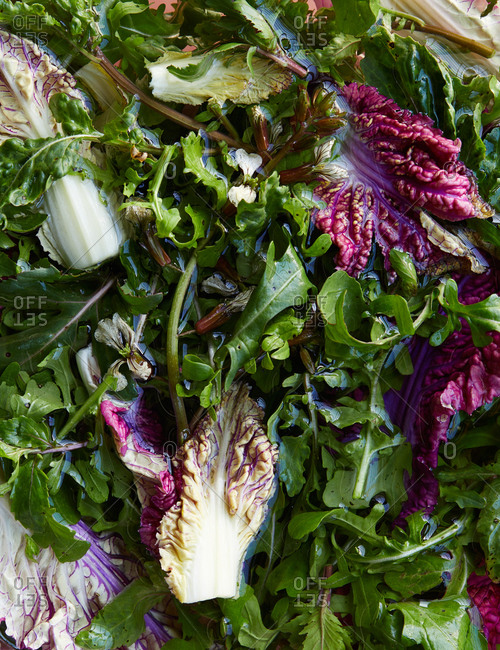 Variety of leafy green and purple lettuce in water