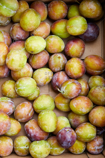 Box filled with fresh picked plums