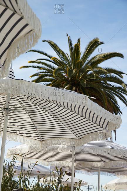 Striped umbrellas under a large palm tree