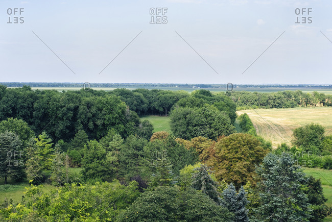 Vast country landscape with lush green forest