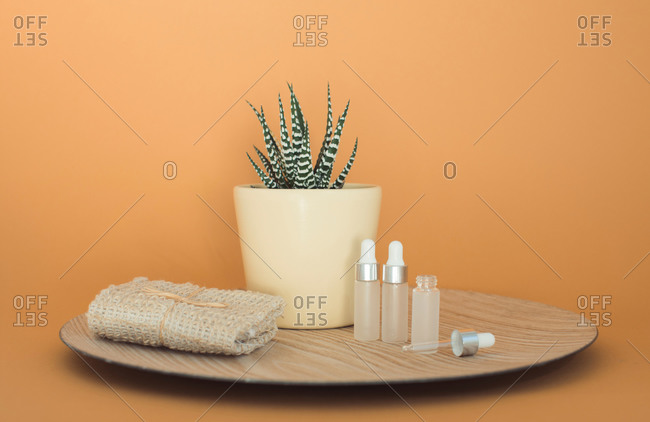 Small succulent plant on tray beside towel and dropper bottles