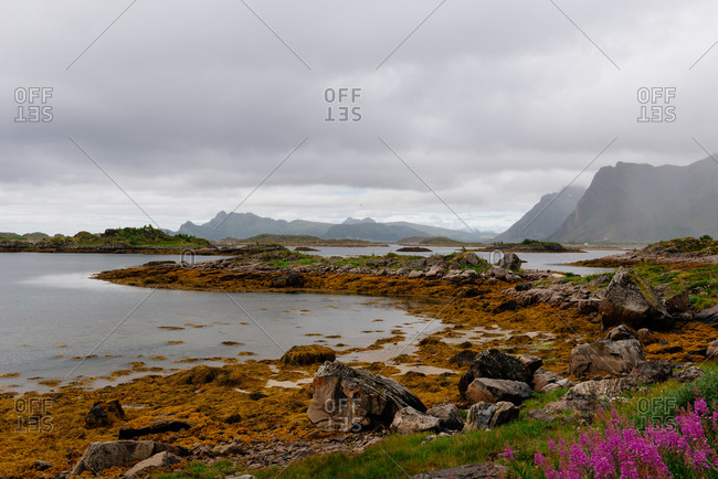 Severe scenery of rough stony sea coast with rocky mountains and flowers under gloomy cloudy sky