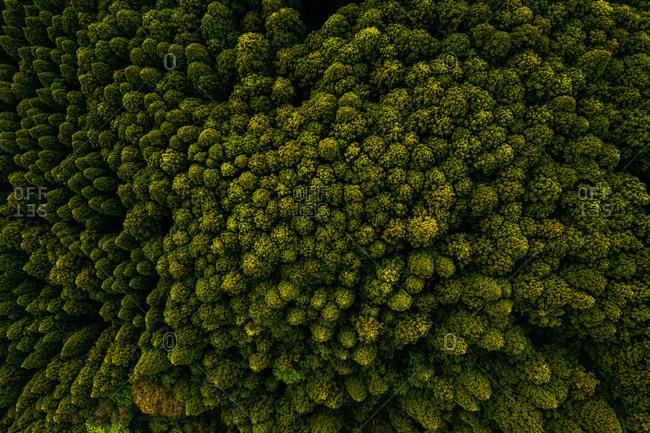 Aerial view of treetops at Yuki River, Chiba, Japan.