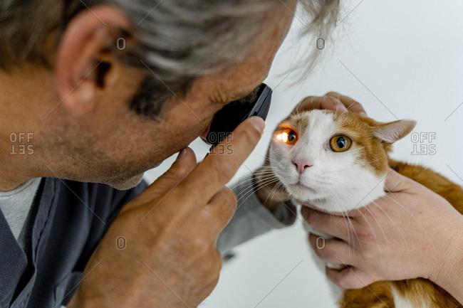 Veterinarian examining cat's eye in clinic