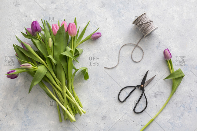 Pair of scissors- spool of string and bouquet of purple blooming tulips