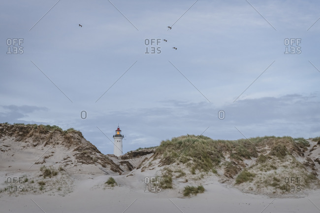 Denmark- Hvide Sande- Sand dune with birds flying over coastal lighthouse in background