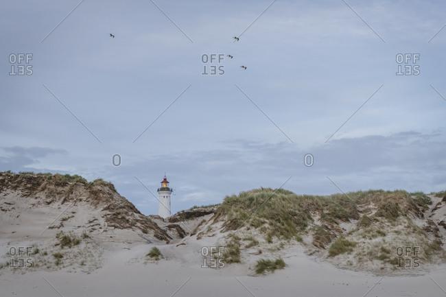 Denmark- Hvide Sande- Sand dune with birds flying over coastal lighthouse in background
