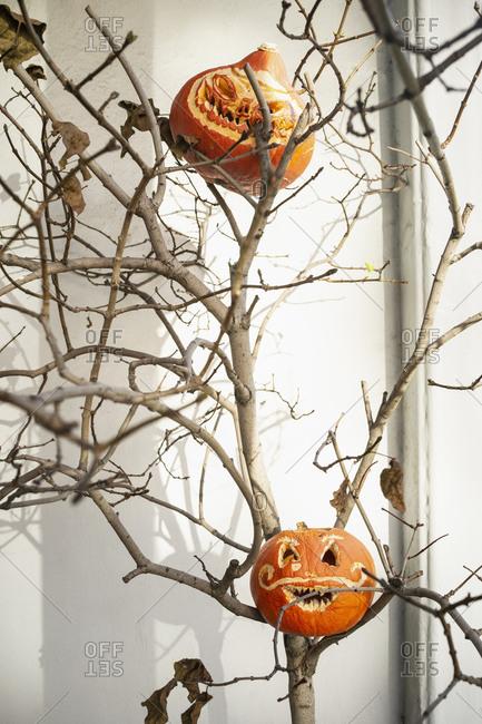 Jack O Lanterns in tree