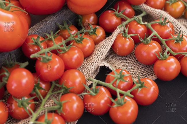 Vibrant red freshly harvested vine tomatoes