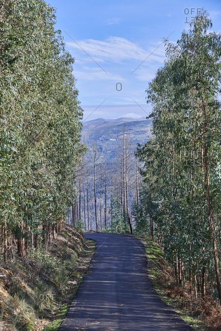 Empty tree-lined road with view of the Serra da Estrela, Portugal
