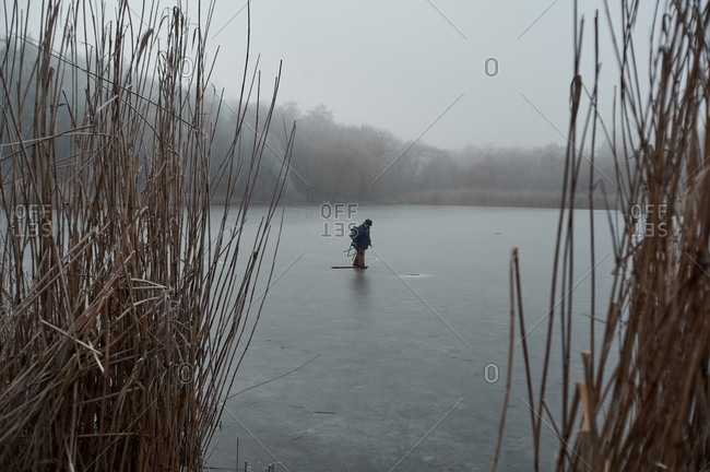 frozen reeds near the water in winter, during a fog covered with frost in cloudy weather