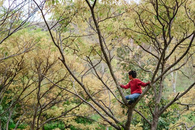 Tween boy climbing a tree in New Zealand