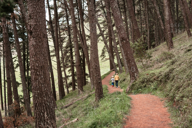 Two children hiking through forest in New Zealand