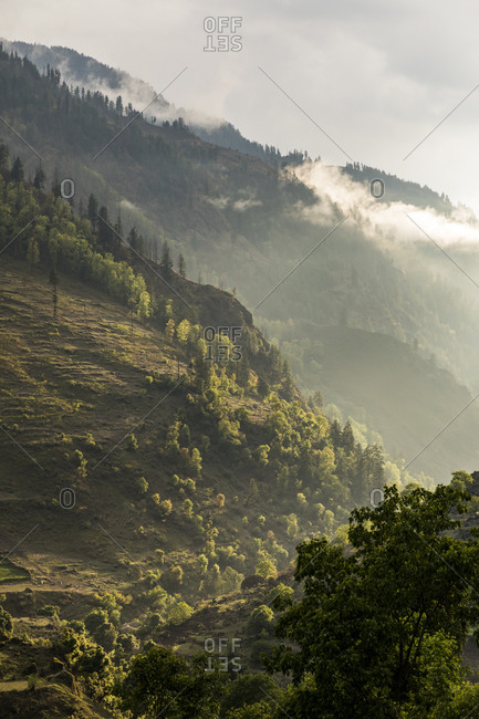 Mountain landscape with pine trees and low clouds at sunset, Himalaya
