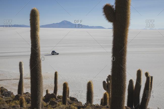 car and Cactus field over incahuasi island in Uyuni