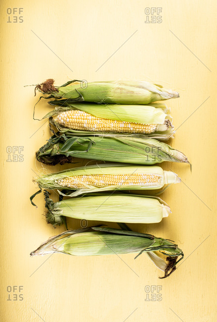 Corn on the cob on yellow background