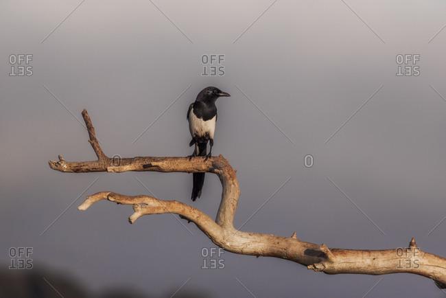 Wild black bird perched on tree