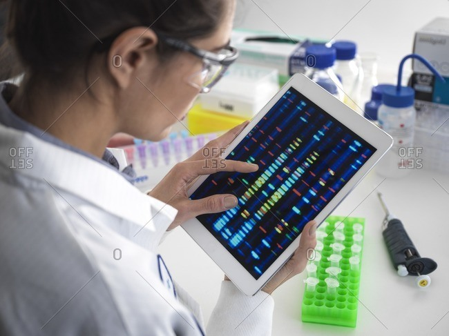 Scientist viewing DNA (deoxyribonucleic acid) profiles on a touch screen tablet during a genetic experiment.