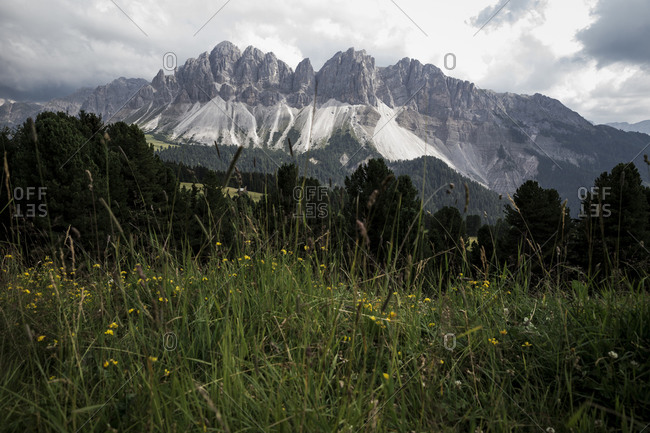 Mountain peaks and wildflowers in The Dolomites in the Alto-Adige region of South Tyrol, Italy.