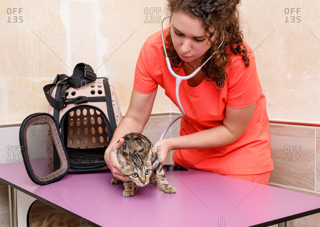 Professional female vet doctor in orange uniform leaning over scared cat on table and using stethoscope in modern vet clinic