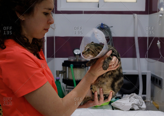 Side view of woman in orange t shirt holding cute cat with veterinary collar in modern vet clinic