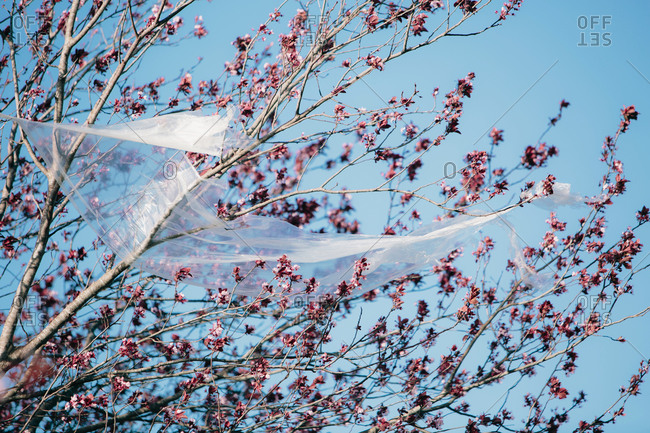 From below transparent plastic material waving on wind while hanging on branches against cloudless blue sky polluting the environment