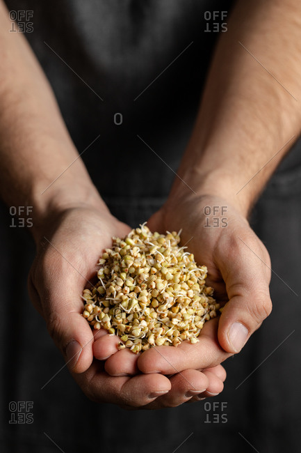 Crop male baker in black apron holding whole wheat sprouts for healthy artisan bread