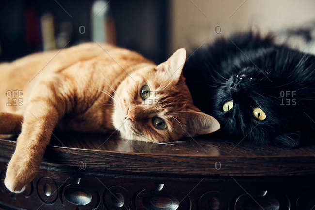 Two cats resting on a wooden table
