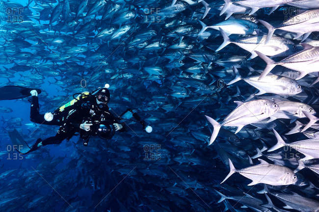 Cocos Island, Costa Rica - October 7, 2018: Scuba diver underwater surrounded by a large school of fish