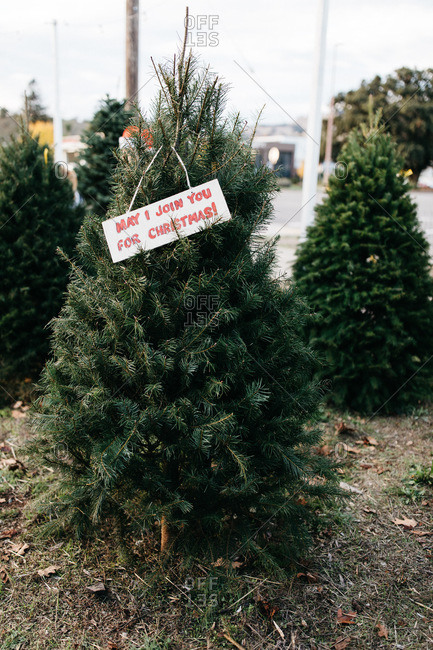 Sign hanging from pine trees for sale on a tree lot