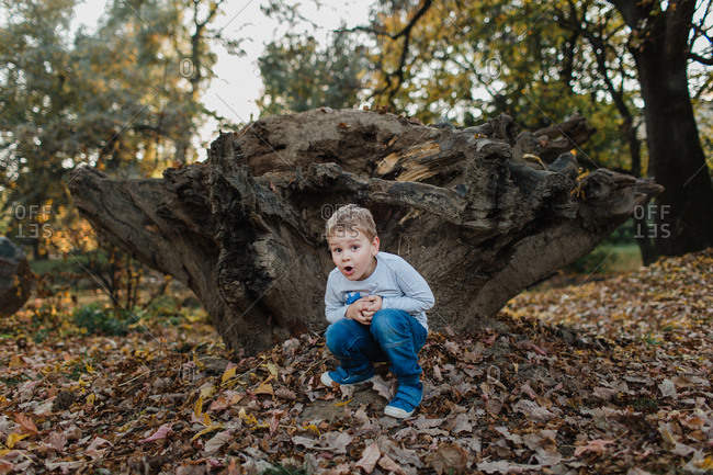 Young boy crouching by tree stump. Cute child crouching on the ground in the woods with autumn leaves and hiding.