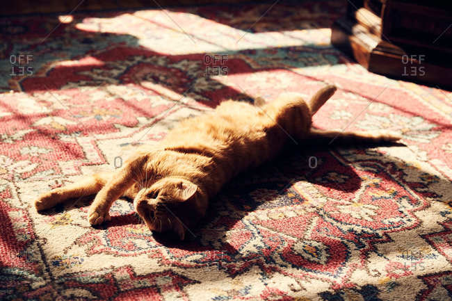 Orange cat relaxing in the sunshine on a rug