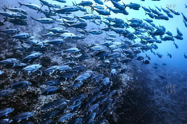 School of fish underwater in Costa Rica
