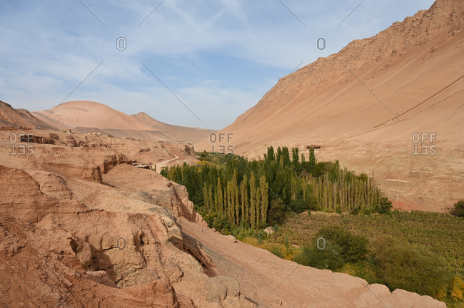 Poplar trees and vineyards growing where water passes through the Taklamakan desert, Xinjiang, China, Asia