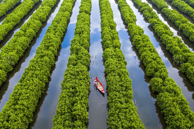 In the middle of mangroves forest, Quang Ngai, Vietnam, Indochina, Southeast Asia, Asia