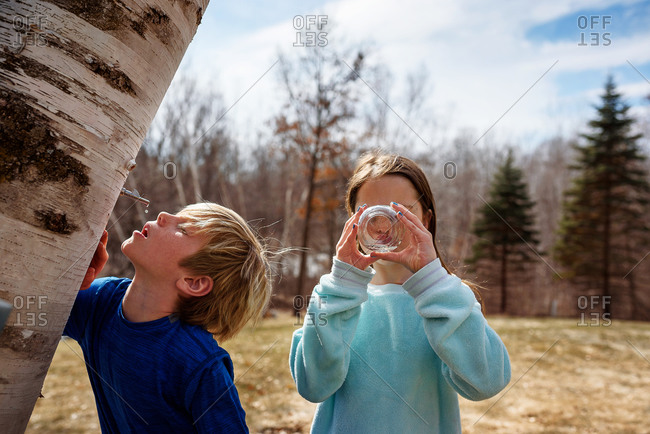 A young boy and girl drinking sap from a tree in the spring