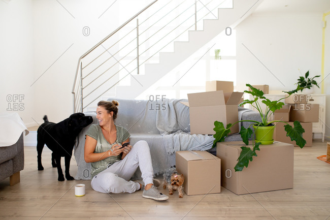 Caucasian woman spending time at home self isolating and social distancing in quarantine lockdown during coronavirus covid 19 epidemic, sitting on the floor with her dogs and using a smartphone during home renovation.