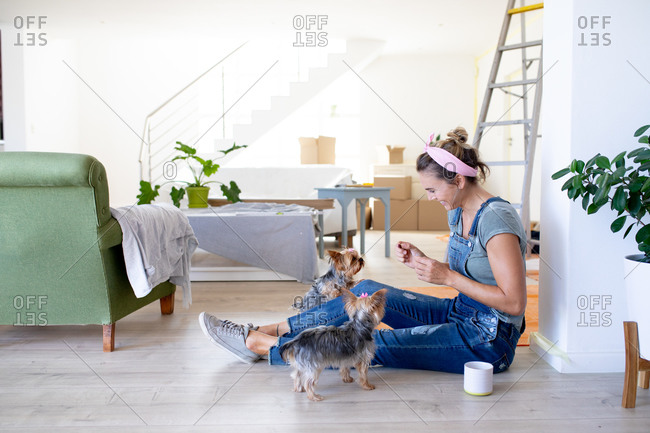 Caucasian woman spending time at home self isolating and social distancing in quarantine lockdown during coronavirus covid 19 epidemic, taking a break while renovating her home, sitting on the floor and playing with her dogs.